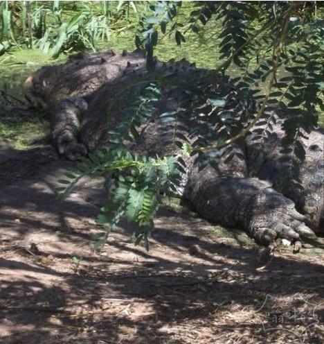 澳大利亚巨型猛兽