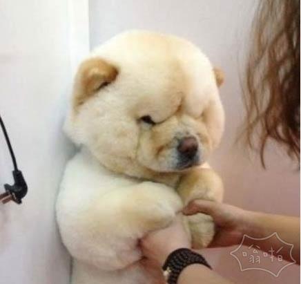 你作为一只狗,长成了熊样。。。你对得起你爹妈吗?