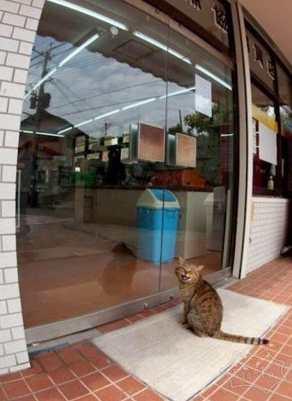 等这门一打开,我冲进去叼了小鱼就跑,想想就开森~~~~~~~~~