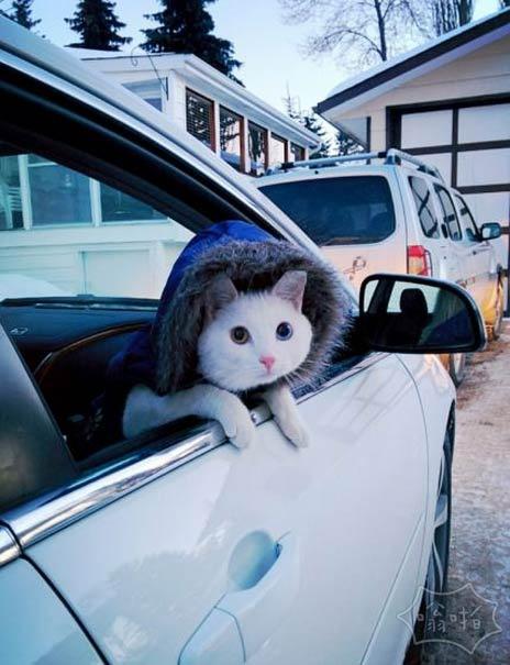 他总是性急,每天开车兜风!