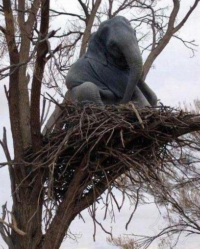 这只大象前世是只小鸟