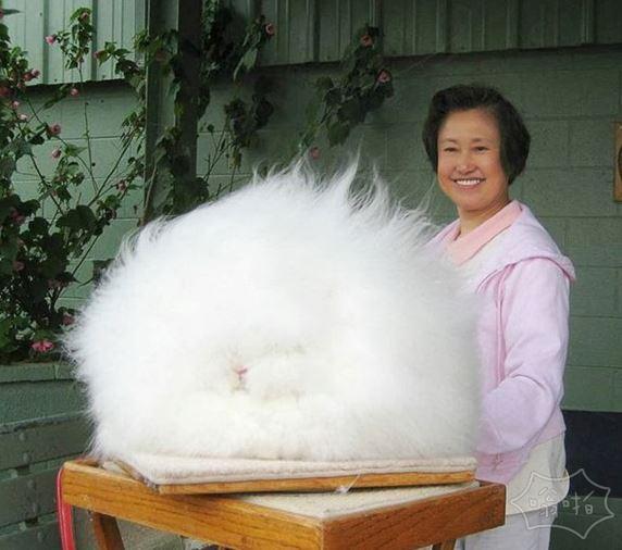 这兔子逆天了