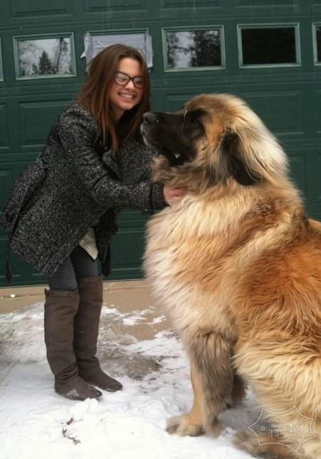 这是兰波格犬。