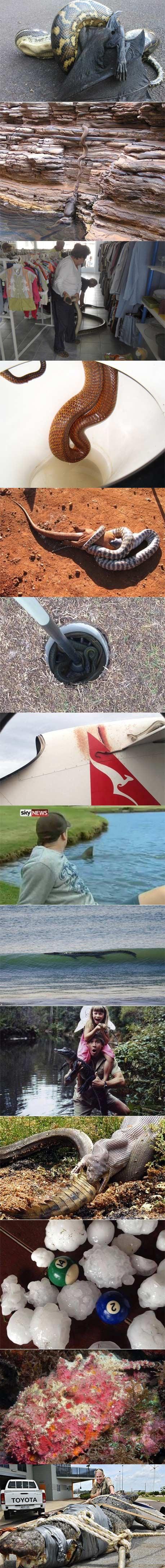 疯狂的澳大利亚