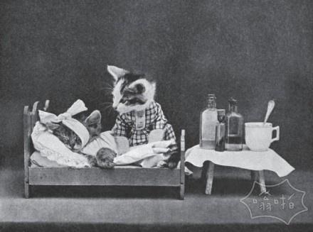 猫咪仿人摄影:上世纪的摄影师已经潮爆了