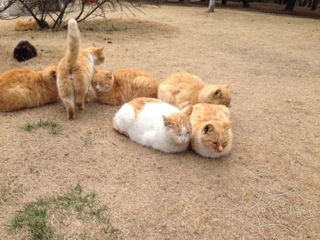 收起 路上偶遇组团来公园的猫咪
