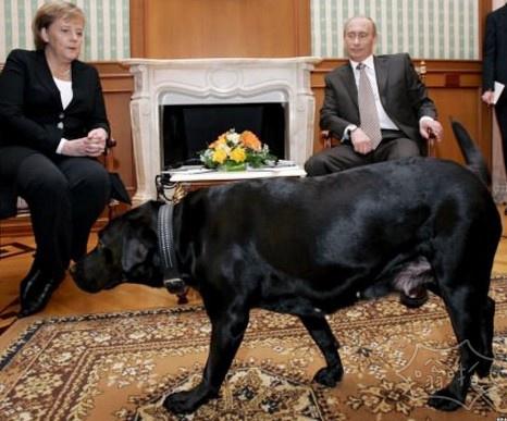 德国总理安格拉•默克尔(Angela Merkel)有一个已知的对狗的恐惧。猜猜普京每次带谁来访问她。