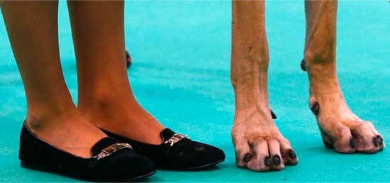大家猜猜右边是什么动物的爪子