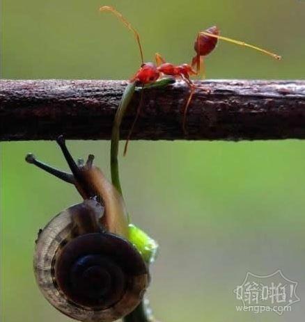 一只蚂蚁的力量啊