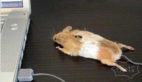 这居然真的是鼠标….