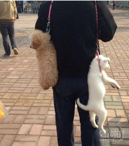 遛狗的至高境界~