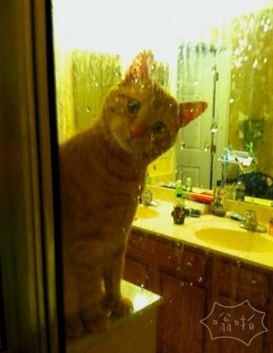 我家的猫猫总是偷偷看我洗澡,救命!害羞 (//´/◒/`//)