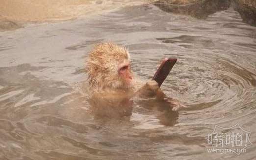 泡温泉也不忘刷个微信上个嗡啪