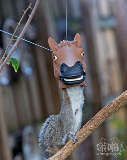 一秒变马:顽皮的小松鼠