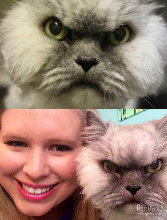 """""""愤怒""""波斯猫新的家庭"""