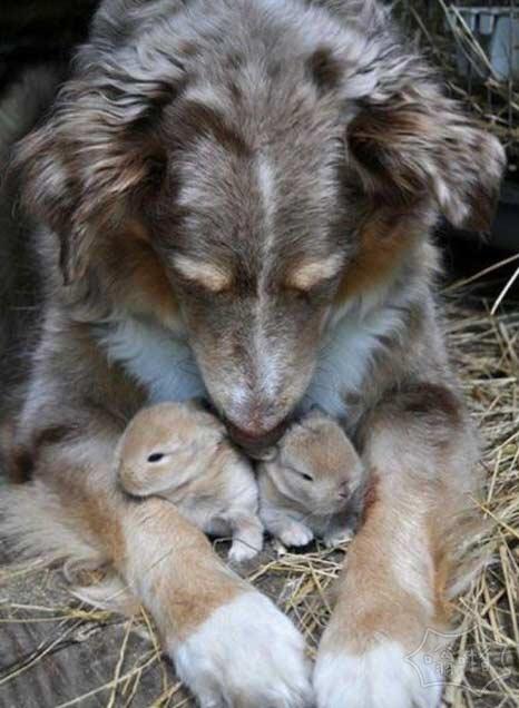 妈妈对每个婴儿都爱