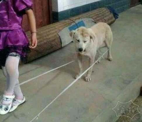 一张图证明狗是人类的好朋友