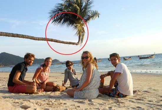 这些椰子树到底经历了什么?
