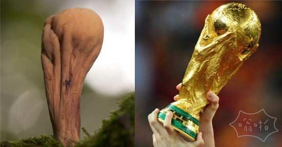 蘑菇看起来就像世界杯