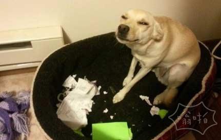 你的作业真的被狗吃了
