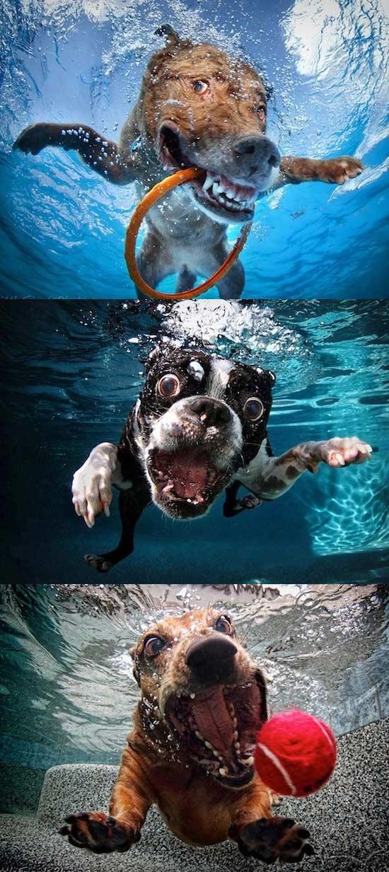 看到水就兴奋的汪星人