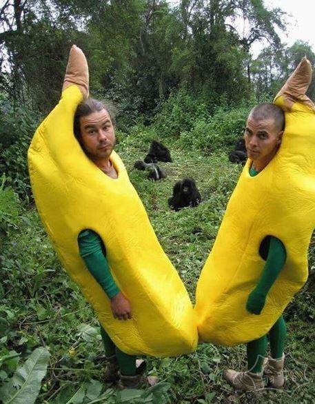 小心大猩猩把你们俩香蕉给活剥了