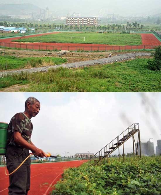 安徽省巢湖中心体育场被村民当作庄稼地