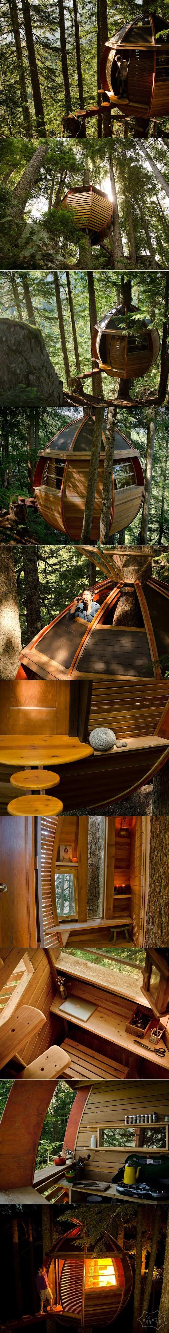 蛋形树屋偷偷坐落在加拿大森林
