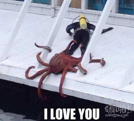 跟章鱼过于亲密