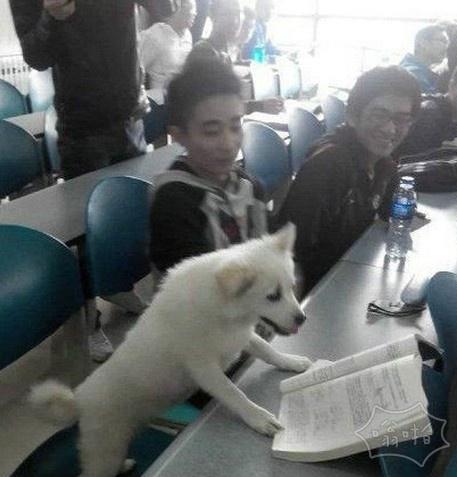 爱学习的狗