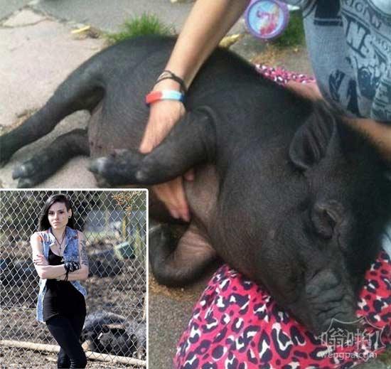 """她把她的宠物猪Marmite借给学校,因此它可能与其它动物交往……但他们把它交给屠宰场,因为它有""""攻击性"""""""