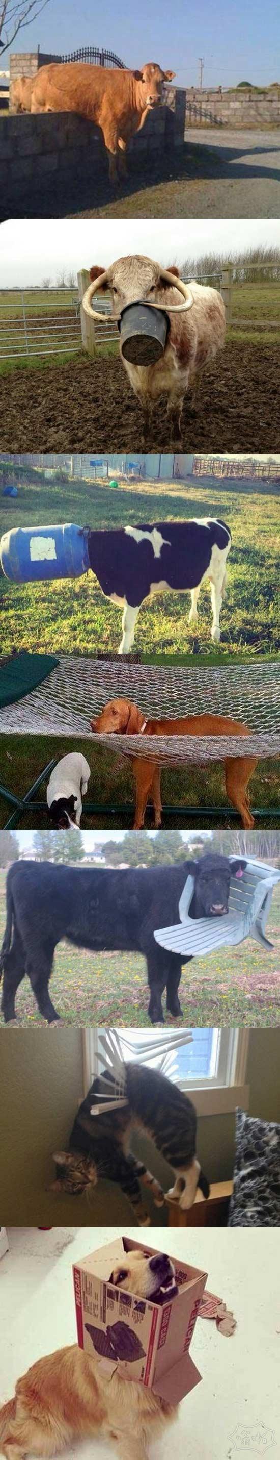 动物困在奇怪的地方