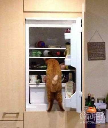 每次进厨房就见这货在冰箱翻吃的,我饿着你了吗