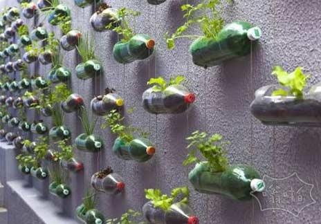 水槽花园的最好的主意