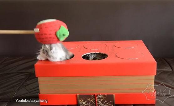 可爱的还是残忍?宠物主人自己玩打鼹鼠,但没有猫受伤(视频)