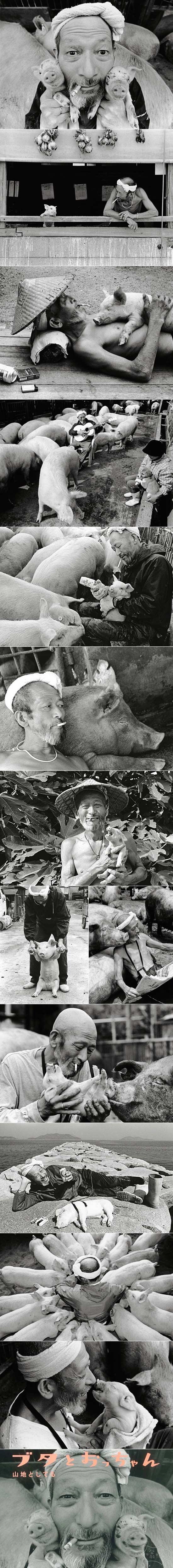 一个农夫和他的猪之间的甜蜜的关系