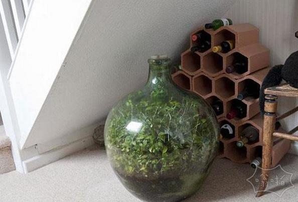 生长了半个多世纪的密封瓶口花园