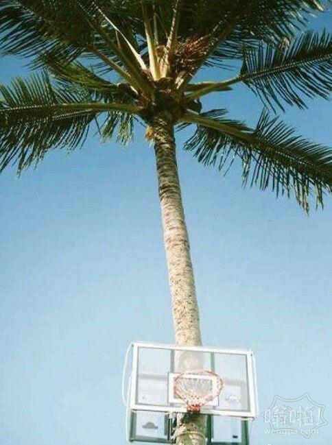 就地取材:小心被椰子砸到