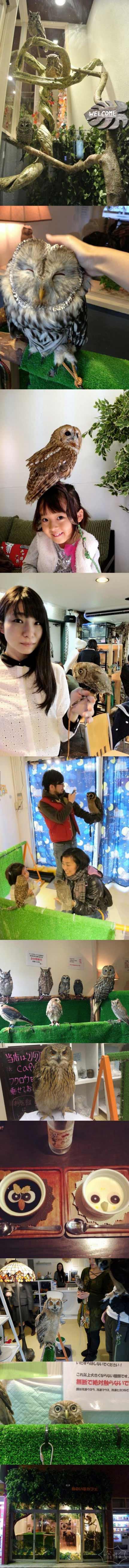 猫头鹰咖啡馆 走近日本流行的猫头鹰主题咖啡馆