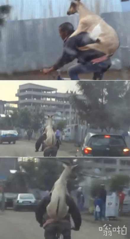 埃塞俄比亚街头粗暴的骑手youtube爆红!根本停不下来(视频)