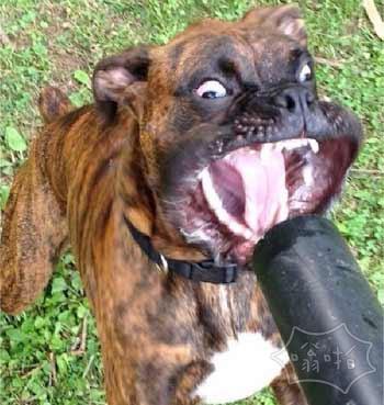 坑狗啊:我以为是吃的,原来是一吹风机