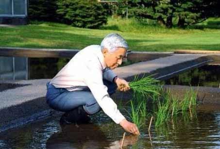 日本天皇兼职当起了农民 自己在皇宫内种水稻插秧