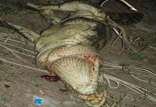津巴布韦一垂钓男子惨遭鳄鱼吞噬