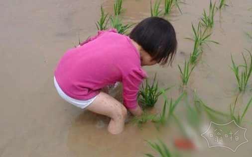 邵阳4岁女娃插秧走红网络