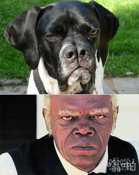 这狗看起来像塞缪尔·杰克逊