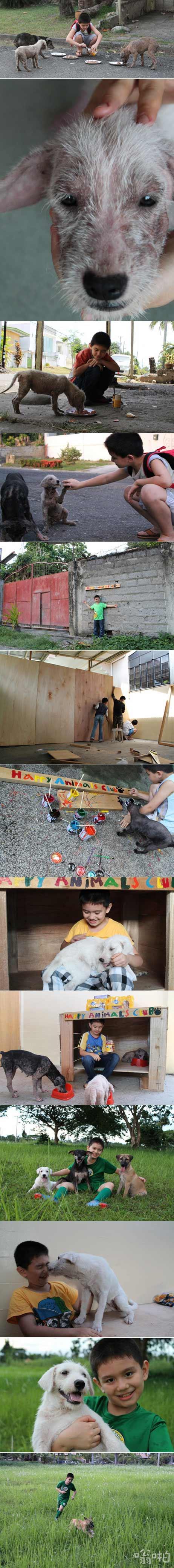 菲律宾9岁男孩用自家废弃车库帮助流浪狗照片引关注 大量网友自发捐助