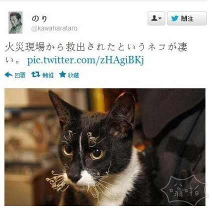 火灾现场里救出来的猫。笑的都是坏人……