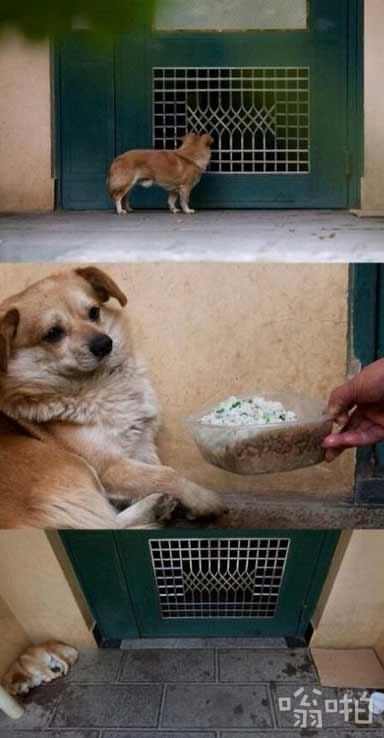 现实版八公犬:主人搬家,小土狗被故意遗弃。小狗不吃不喝在门口苦等了一周了。或许它不明白发生了什么事,但它心里肯定很难过。