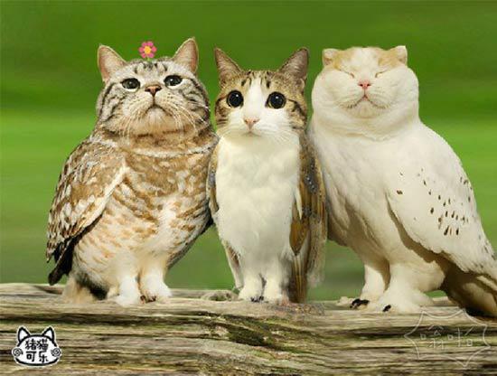 猫和猫头鹰结合起来