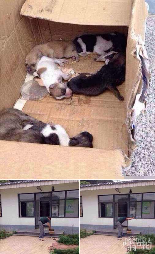 杭州犬类收容所人员摔死7只小狗  刚送到收容所小狗被生生摔死